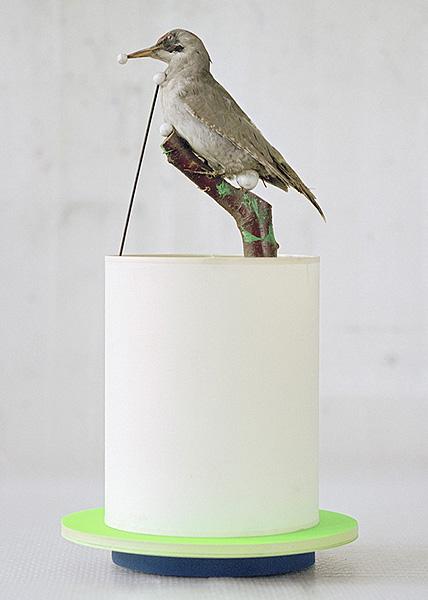ausgestopfter Vogel auf einem hohen Objekt