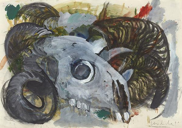 Schädel eines Schafs