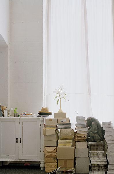 Affe auf einem Bücherstapel